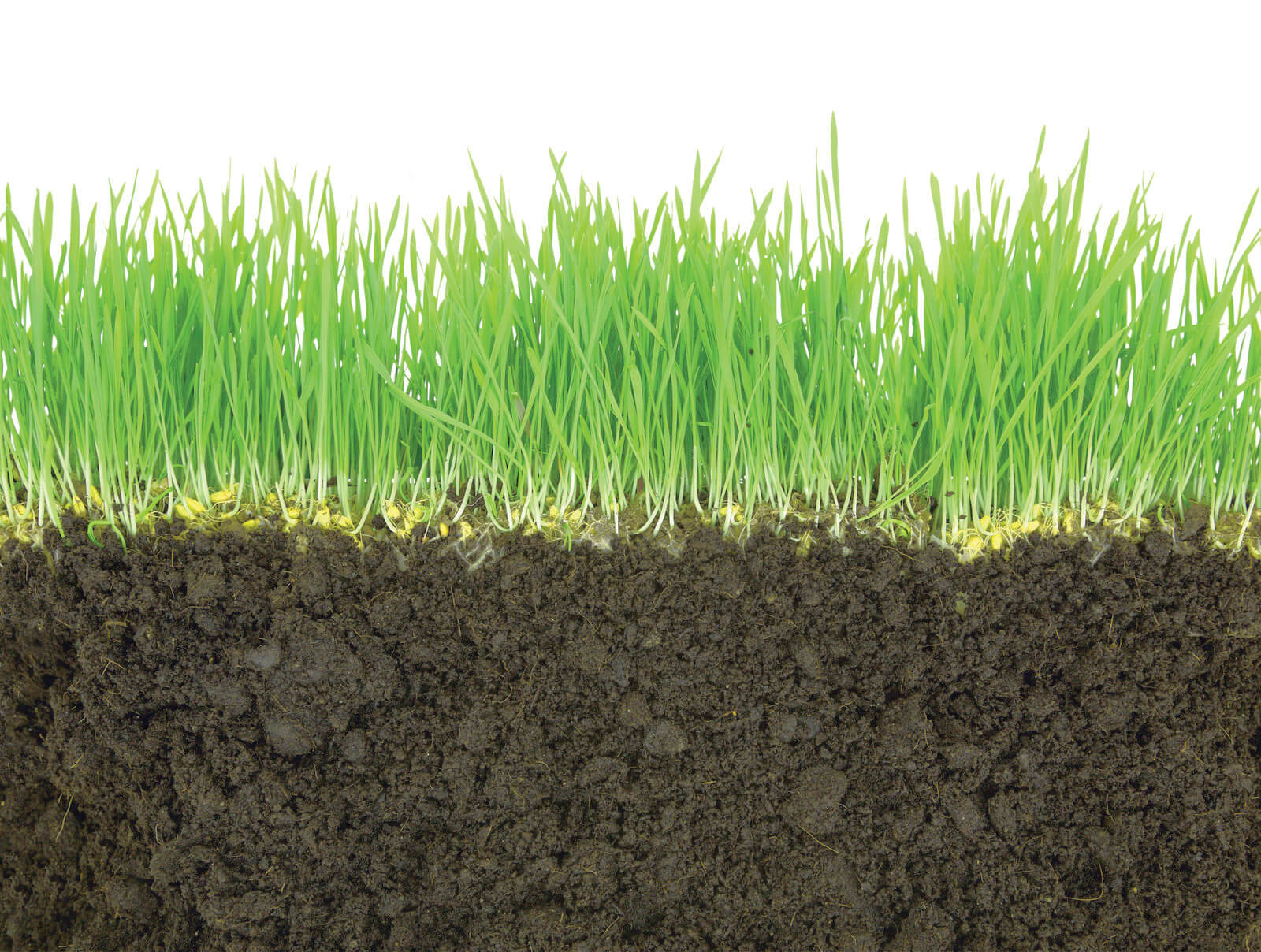 Micronutrient content in our soil
