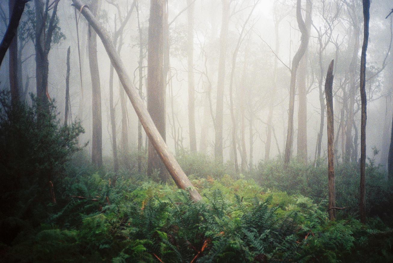 Yas Misty Mountain-1 copy.jpg