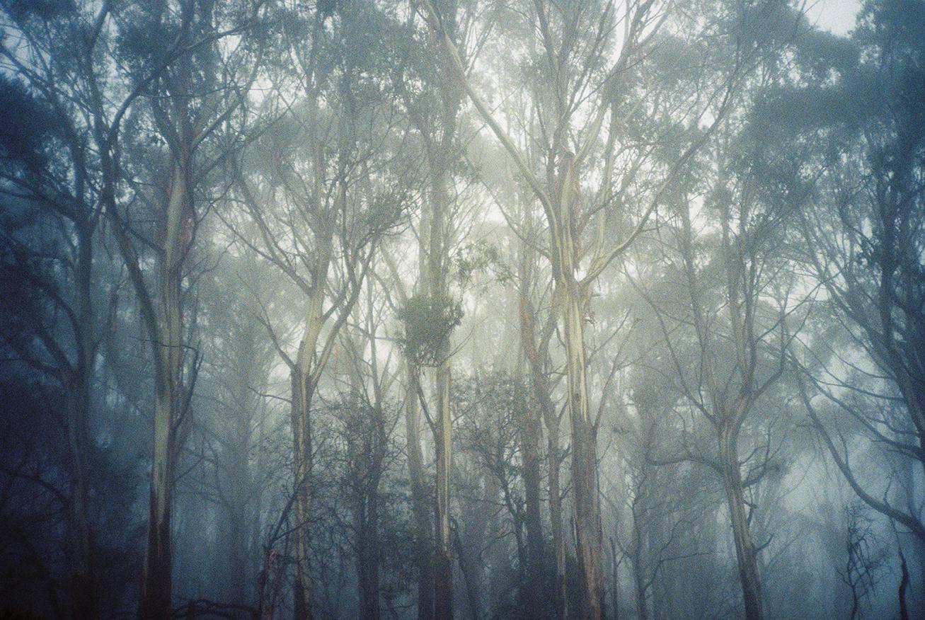 Yas Misty Mountain-8 copy.jpg