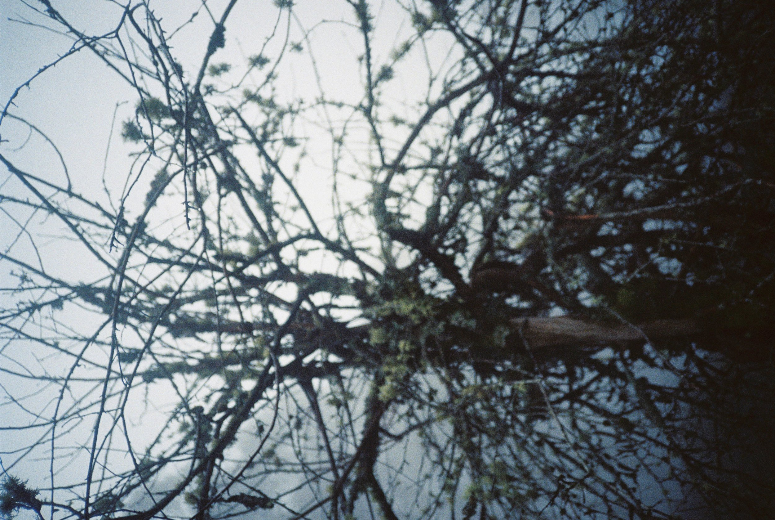 Yas Misty Mountain-7 copy.jpg
