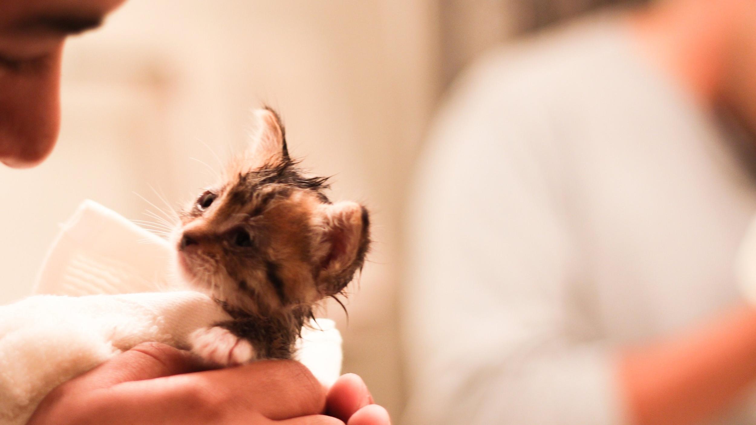 rescue-kittens-first-bath_t20_NozBNE.jpg