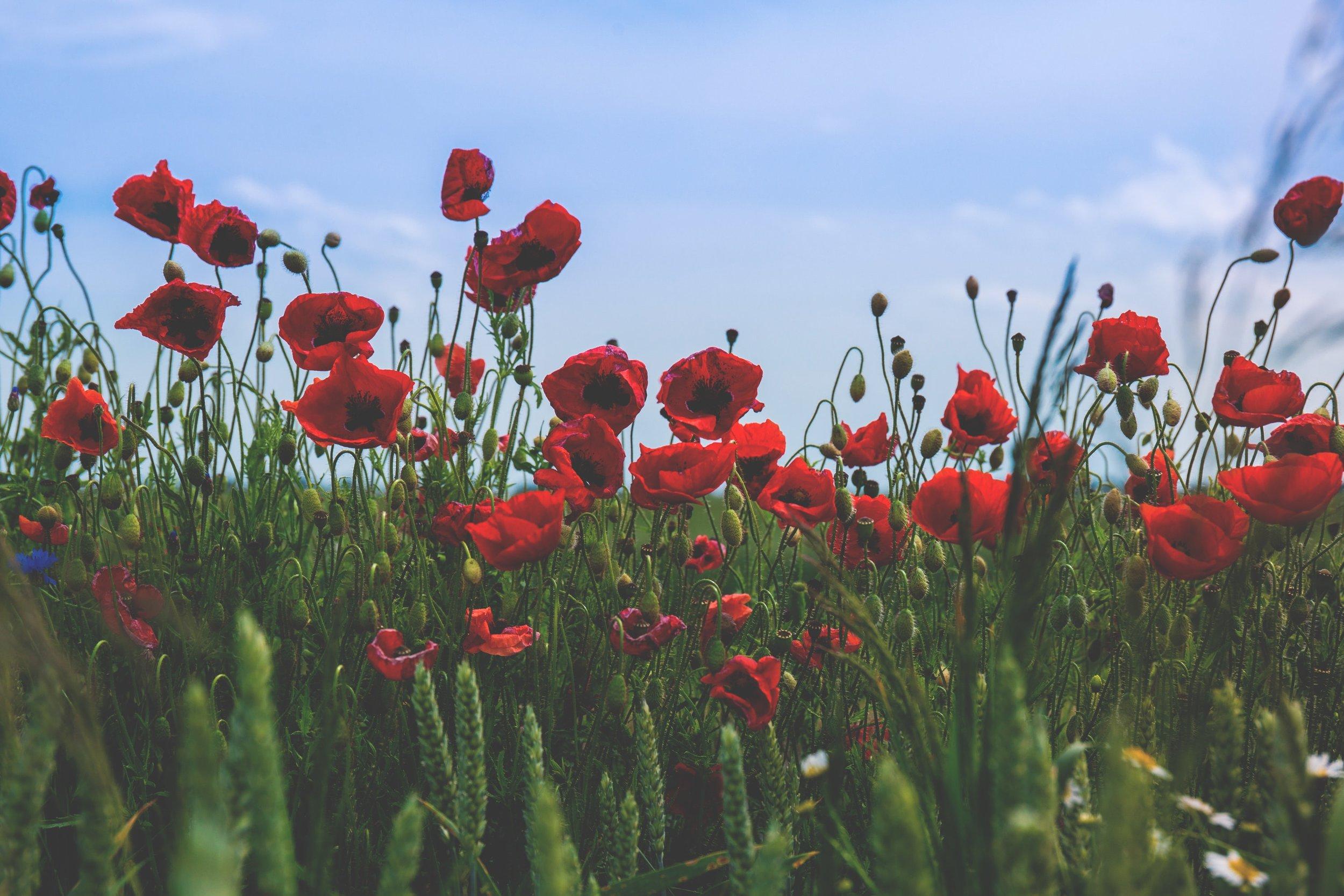 bloom-blossom-field-112764.jpg