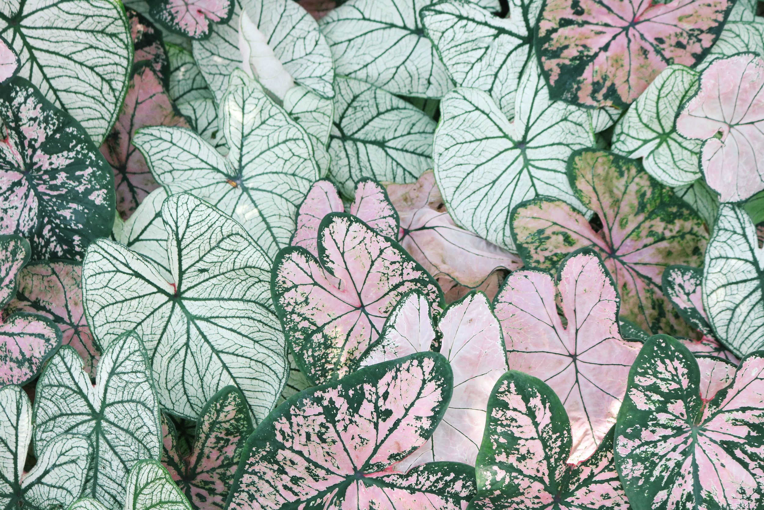 Canva - Photo of Leaves.jpg