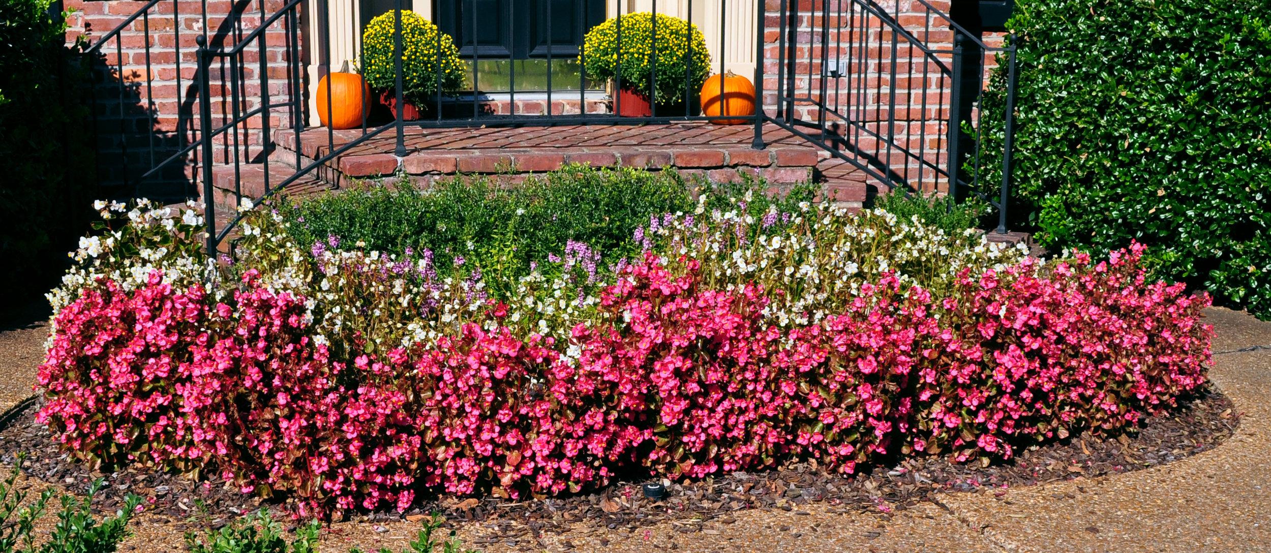 Mazza Spring Flowers 1.jpg