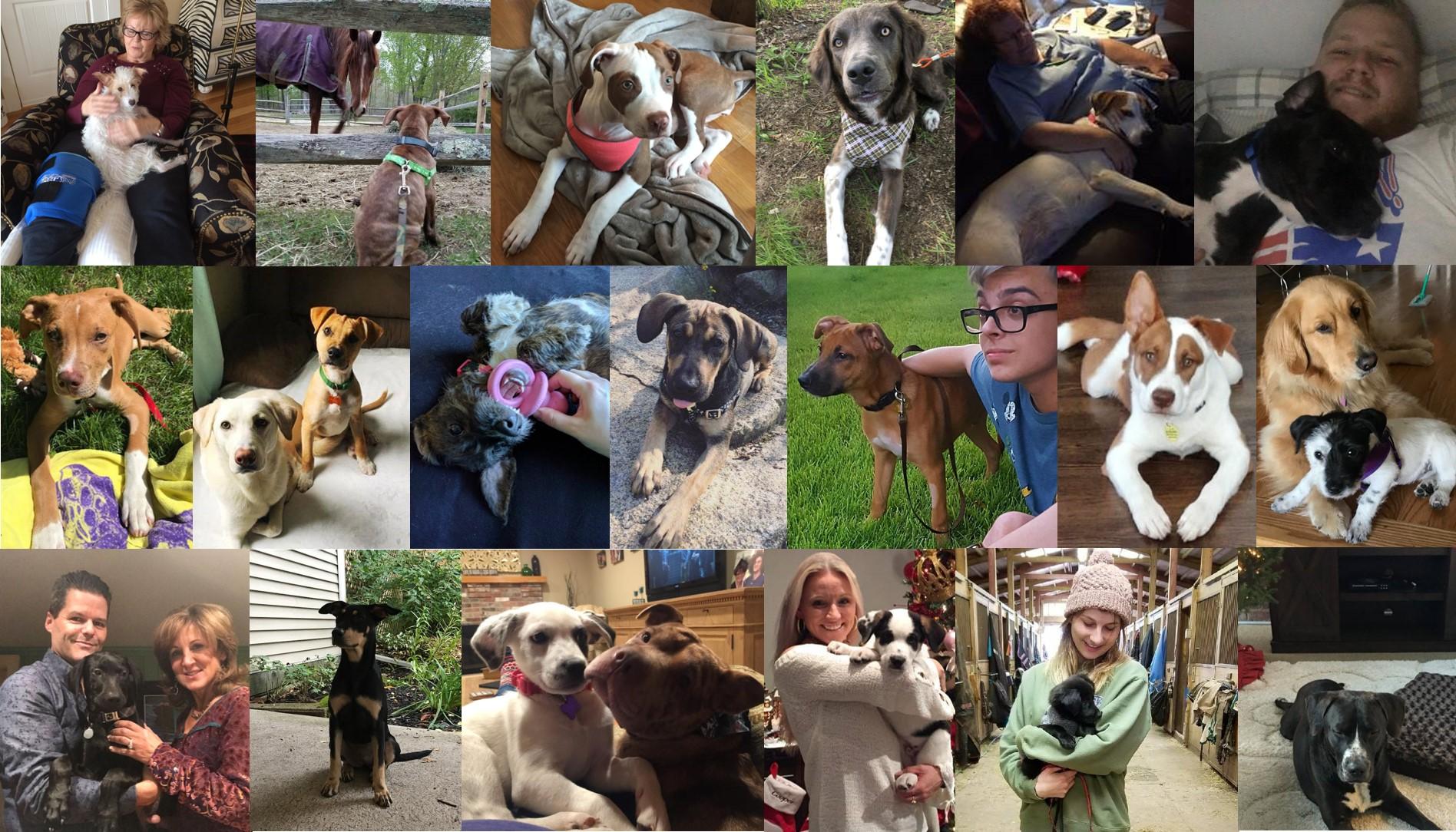 1st row: Gracie (FKA Dot), Peanut (FKA Marley), Perry (FKA Patches), Greyson, Hayley, Wesson (FKA Legume) 2nd row: Hazel, Teddy (FKA Buddy), Sophie (FKA Sia), Moose (FKA Bruiser), Dio (FKA Robin), Cooper (FKA Apache), Tallulah (FKA Anna) 3rd row: Bowie, Kona (FKA DiDi), Millie (FKA Dottie), Ollie, Link (FKA Cole), Toby