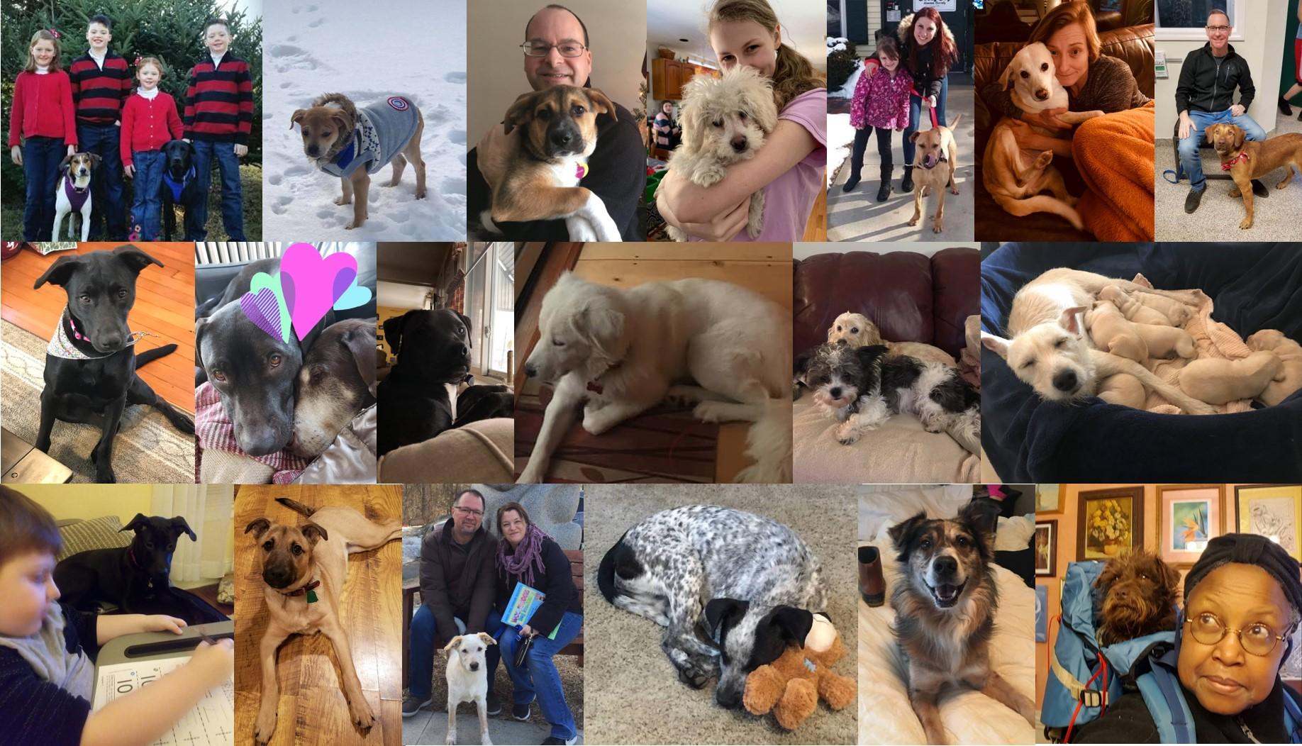 1st: Rey (FKA Peppermint Patty), Archie (FKA Liam), Cedar (FKA Gemma), Norman, Prince, Calli (FKA Sally), Captain 2nd: Stella, Stanley (FKA Samson), Dallas (FKA Sheldon), Whisper, Sprocket (FKA Rocket), June & puppies 3rd: Gracie (FKA Yin), Nikita (FKA Alex), Olaf, Pebbles, Champ, Mazir (FKA Rusty), Peanut