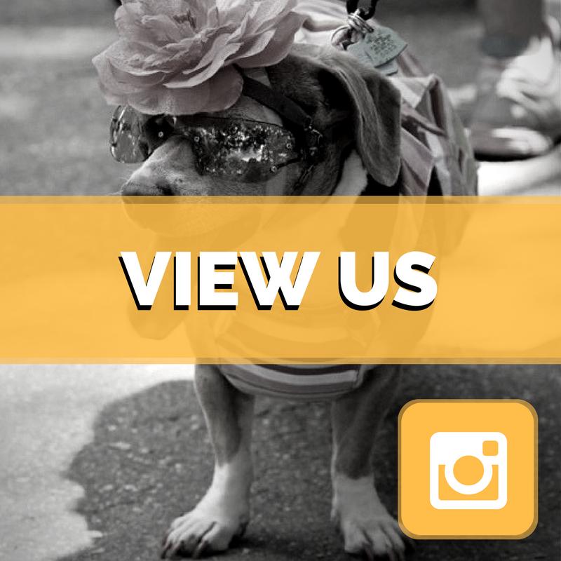 CC Follow Us Instagram (4).png
