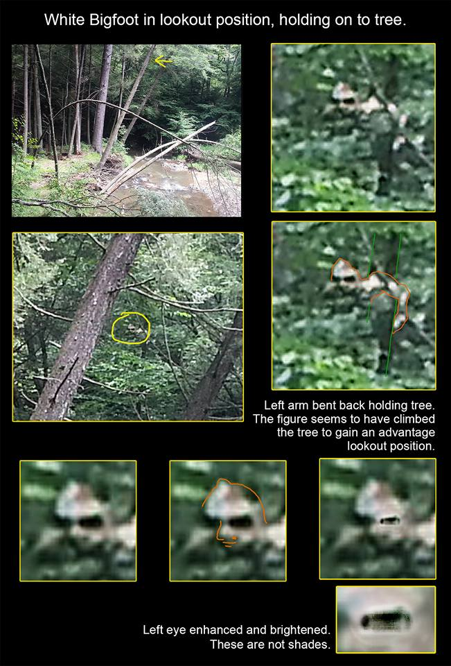 White bigfoot Dave photographed in western Pennsylvania.