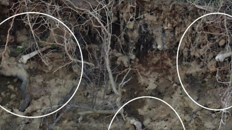 Bones eroding from the earth on Hart Island.