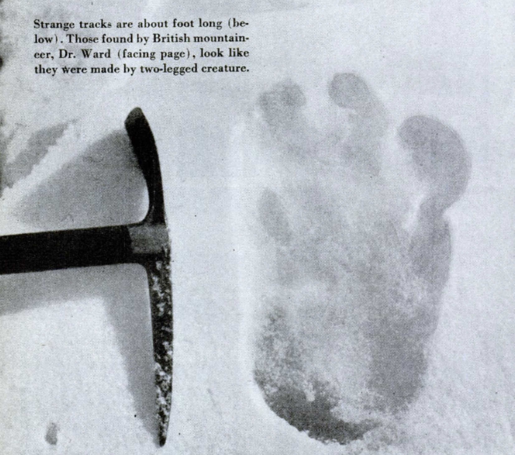 Alleged Yeti footprint found by Michael Ward at Menlung Glacier on the 1951 Everest Expedition with Edmund Hillary in Nepal