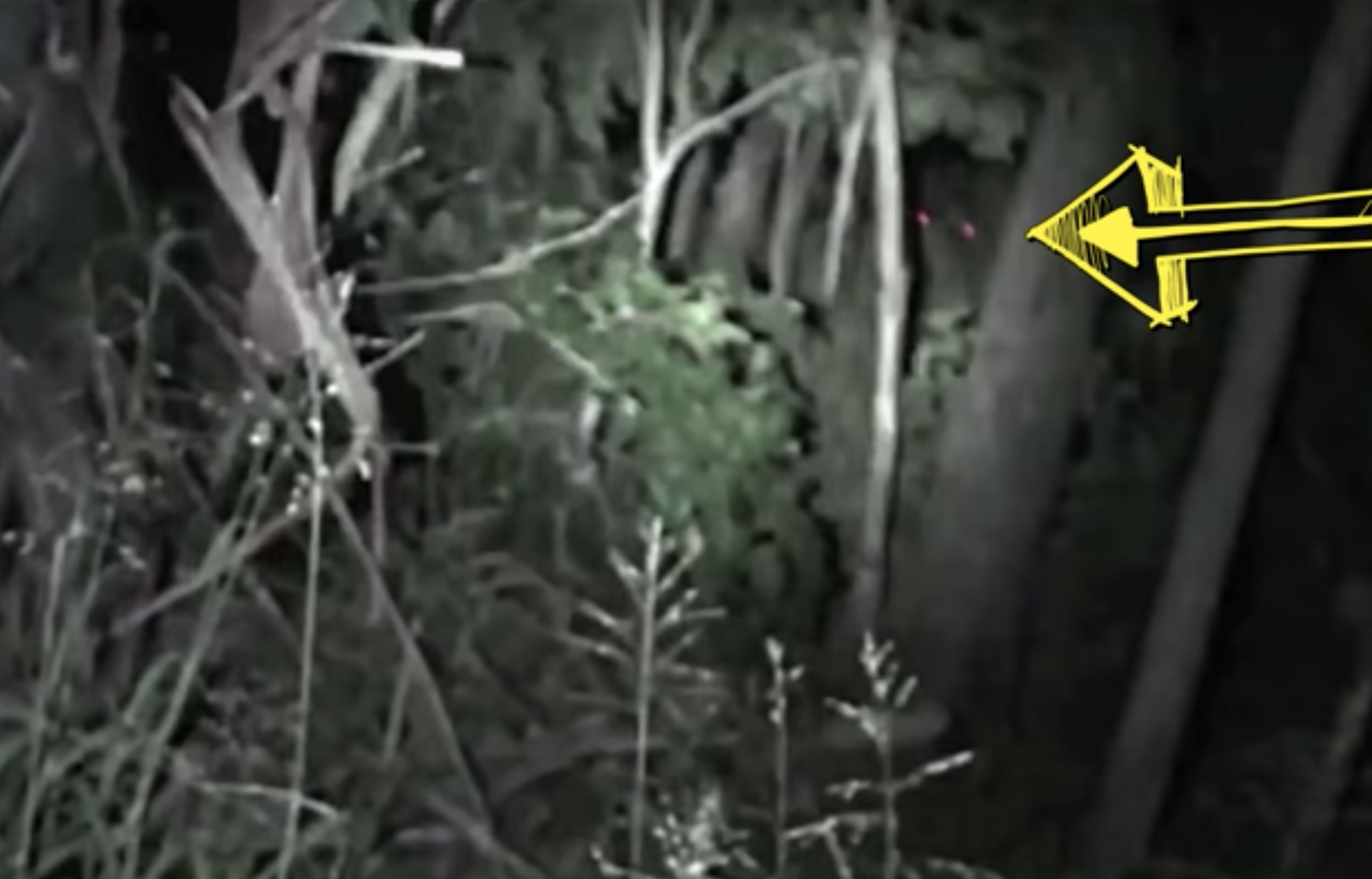Red Eyes was reportedly caught on    video    in Australia in 2018