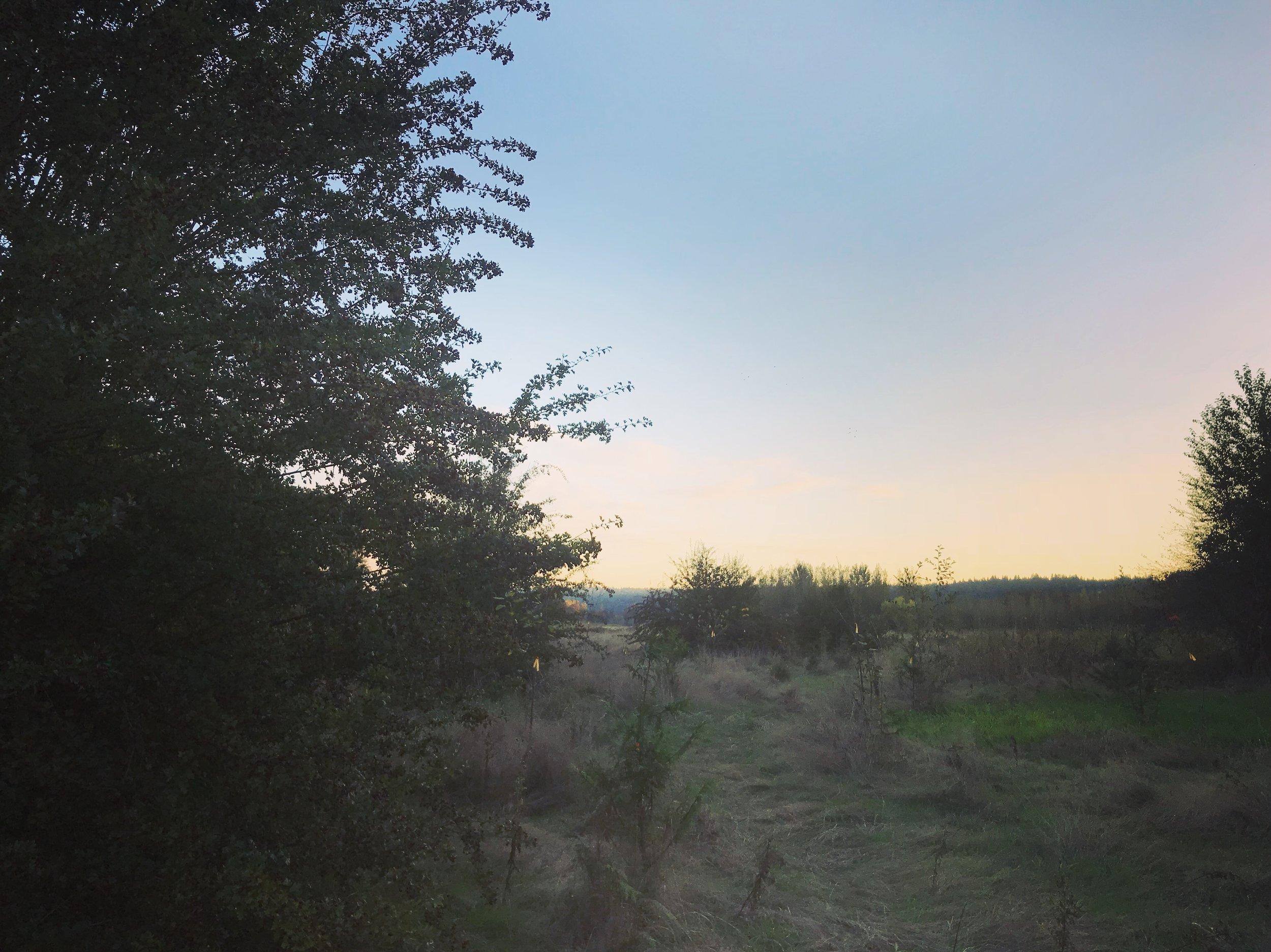Harvesting berries at Sunset