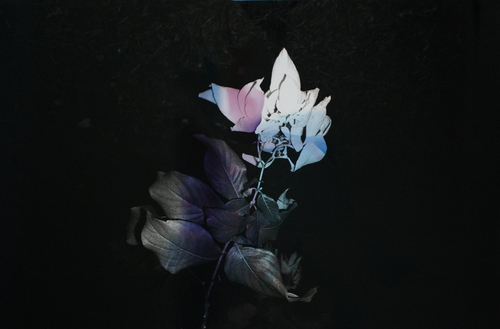 Genevieve_Chua_Black+Varieties+#4+Aruna.jpg