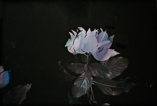 Genevieve_Chua_Black+Varieties+#9.jpg