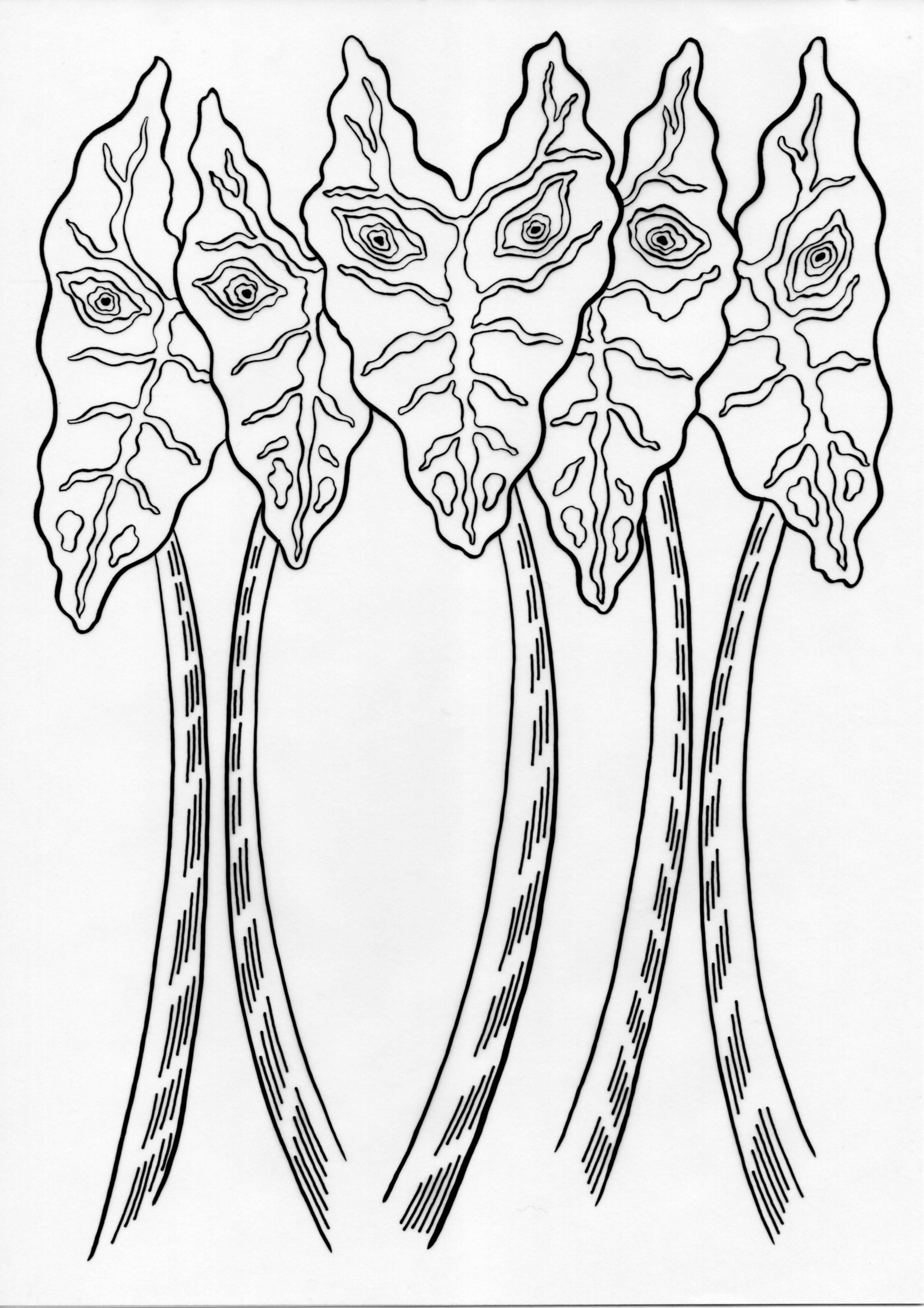 Leering Alocasia – Inked Drawings