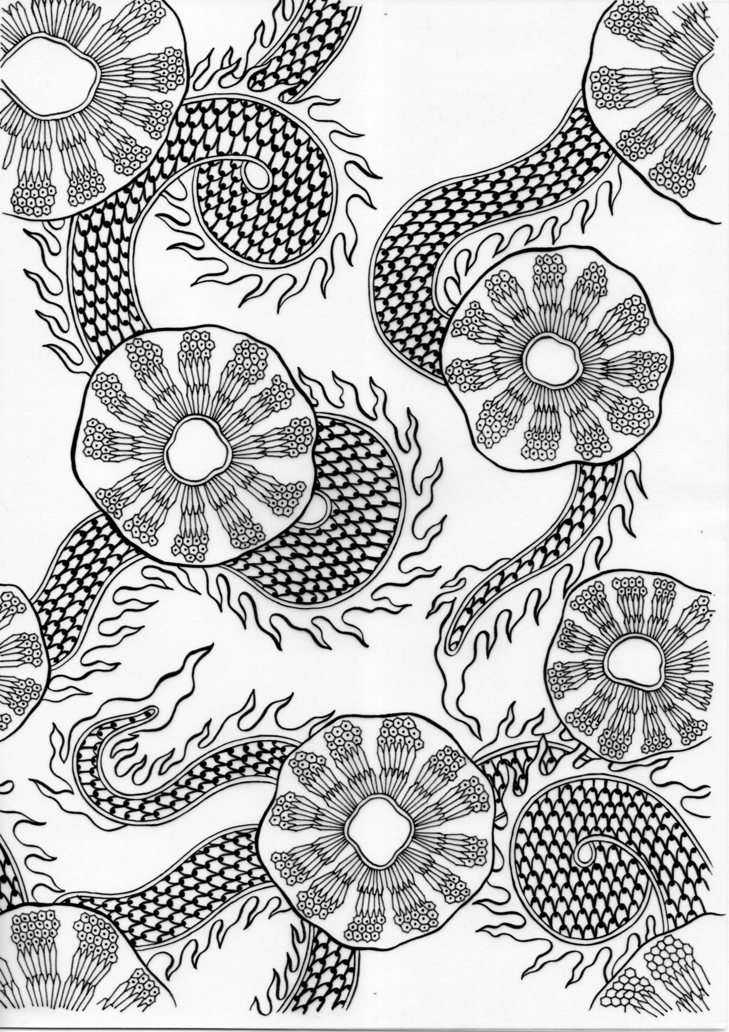 Screwpine – Inked Drawings