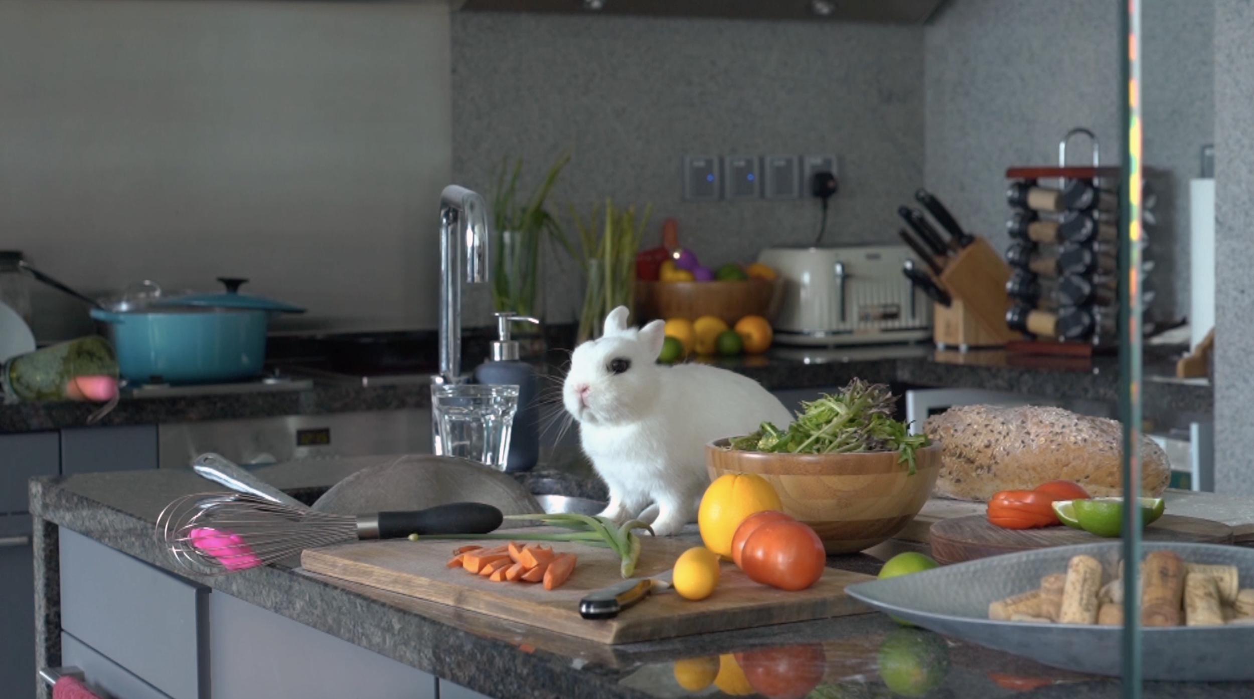 The Rabbit In Her Kitchen
