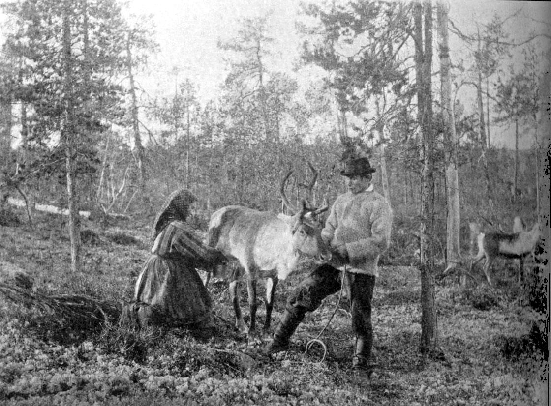 Reindeer_milking.jpg