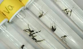 zika1.jpg