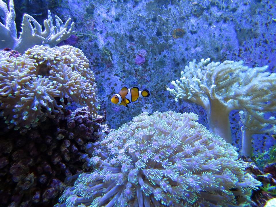 coral-1079268_960_720.jpg