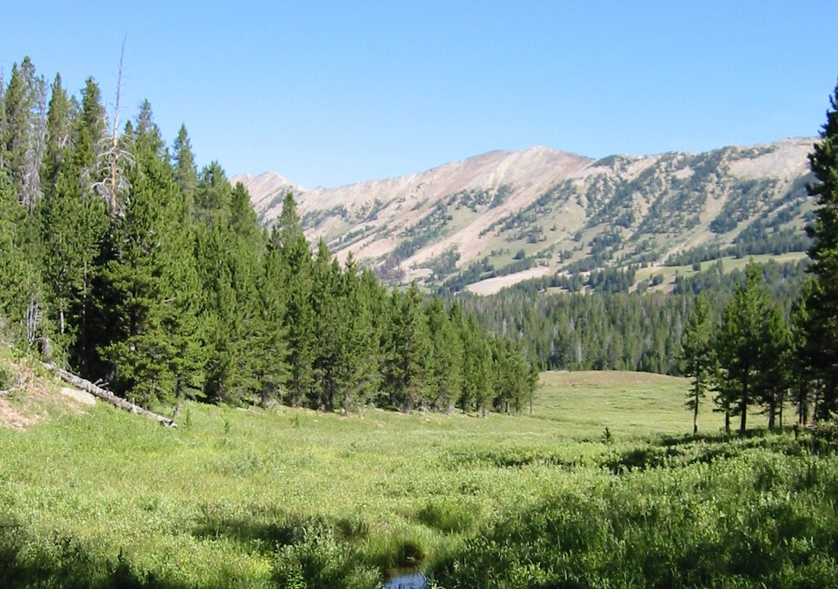 forests Gallatin_National_Forest.jpg