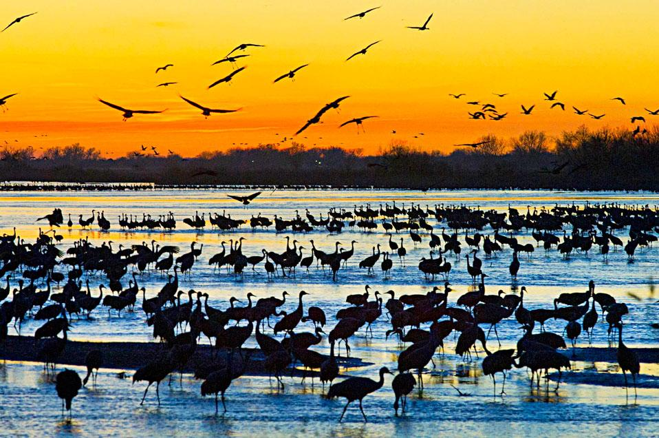 migratory 102187563_w.jpg