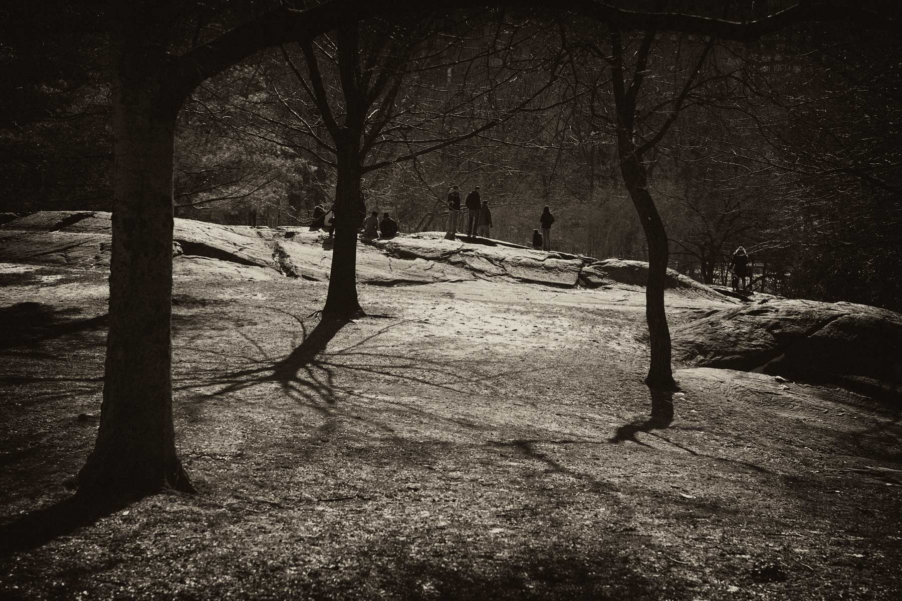 Central Park Winter Studies