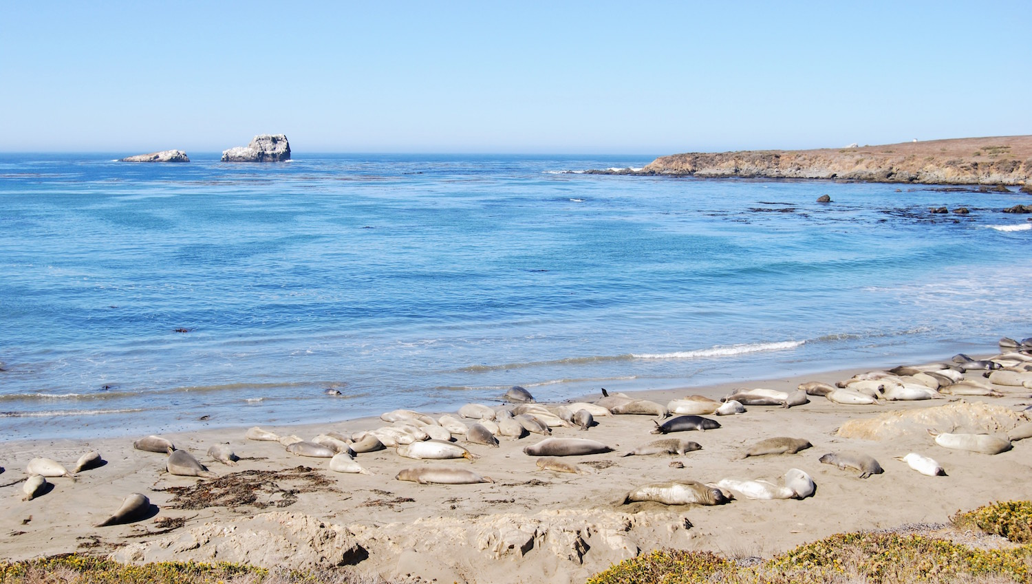 Elepahnt seal Overlook, California, San Simeon.jpg