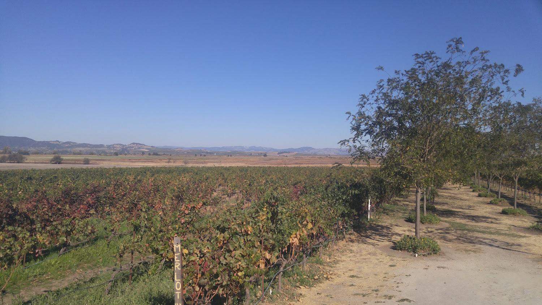Vineyard, Sonoma, San francisco.jpg