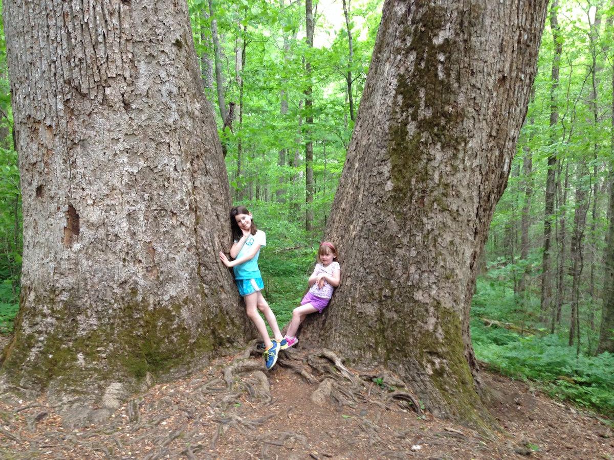 joyce kilmer memorial forest.JPG