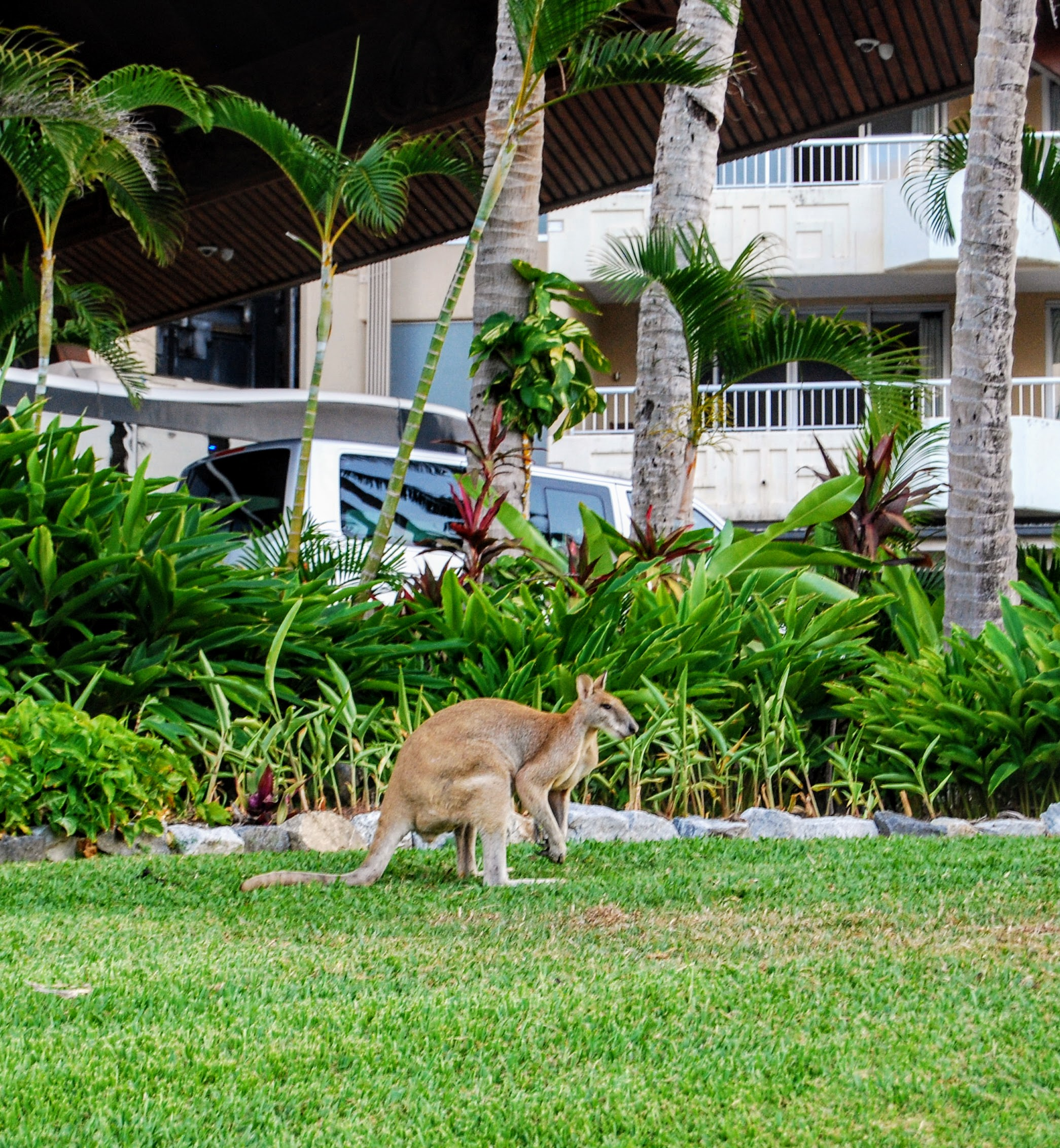 Wallaby version of chillaxing