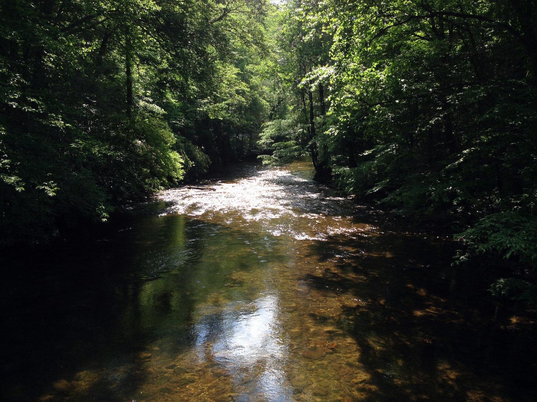 davidson river.JPG