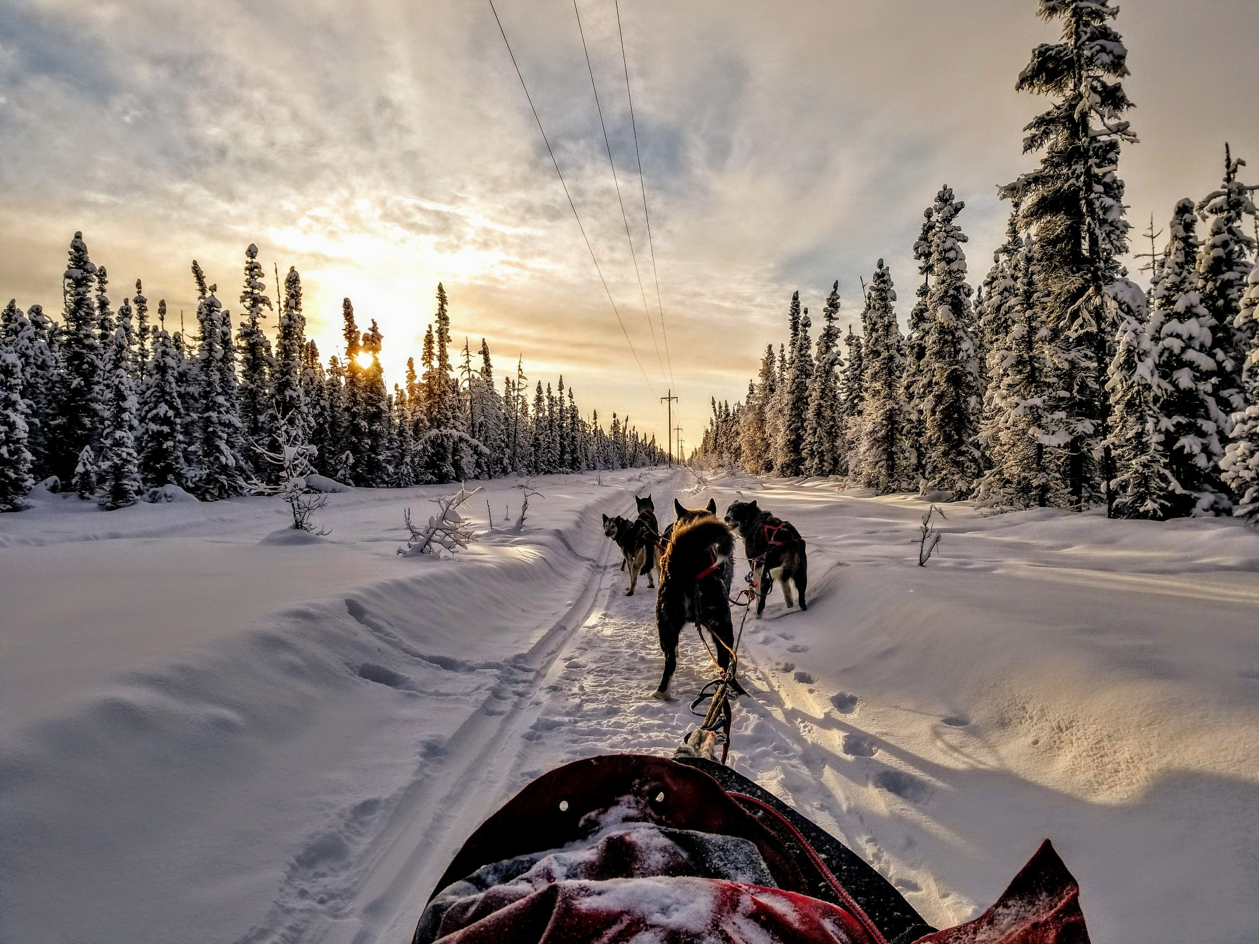 Mushing was never on my bucket list and it should have been. So much fun.