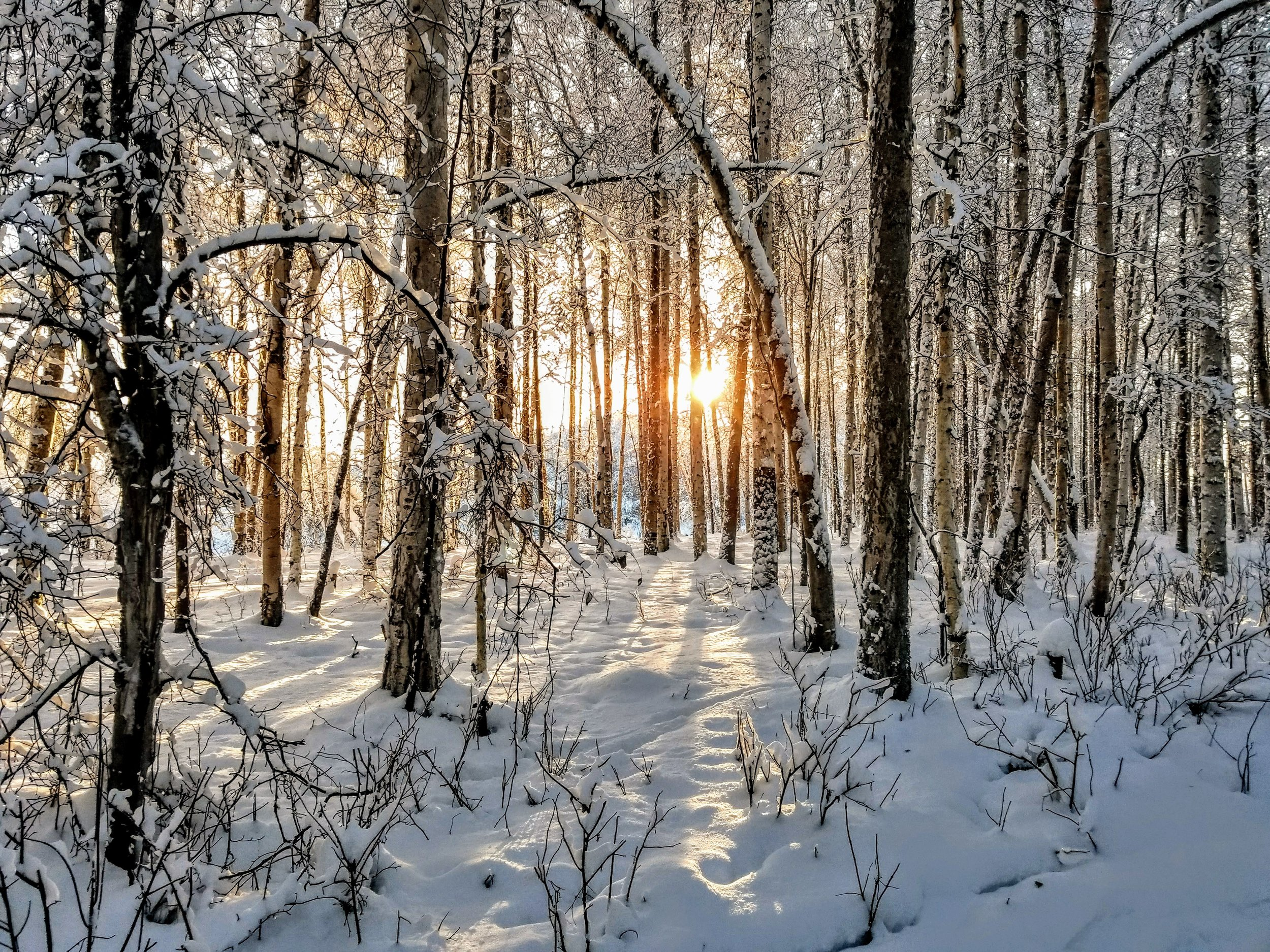 Snow covered woods don't get much better than this