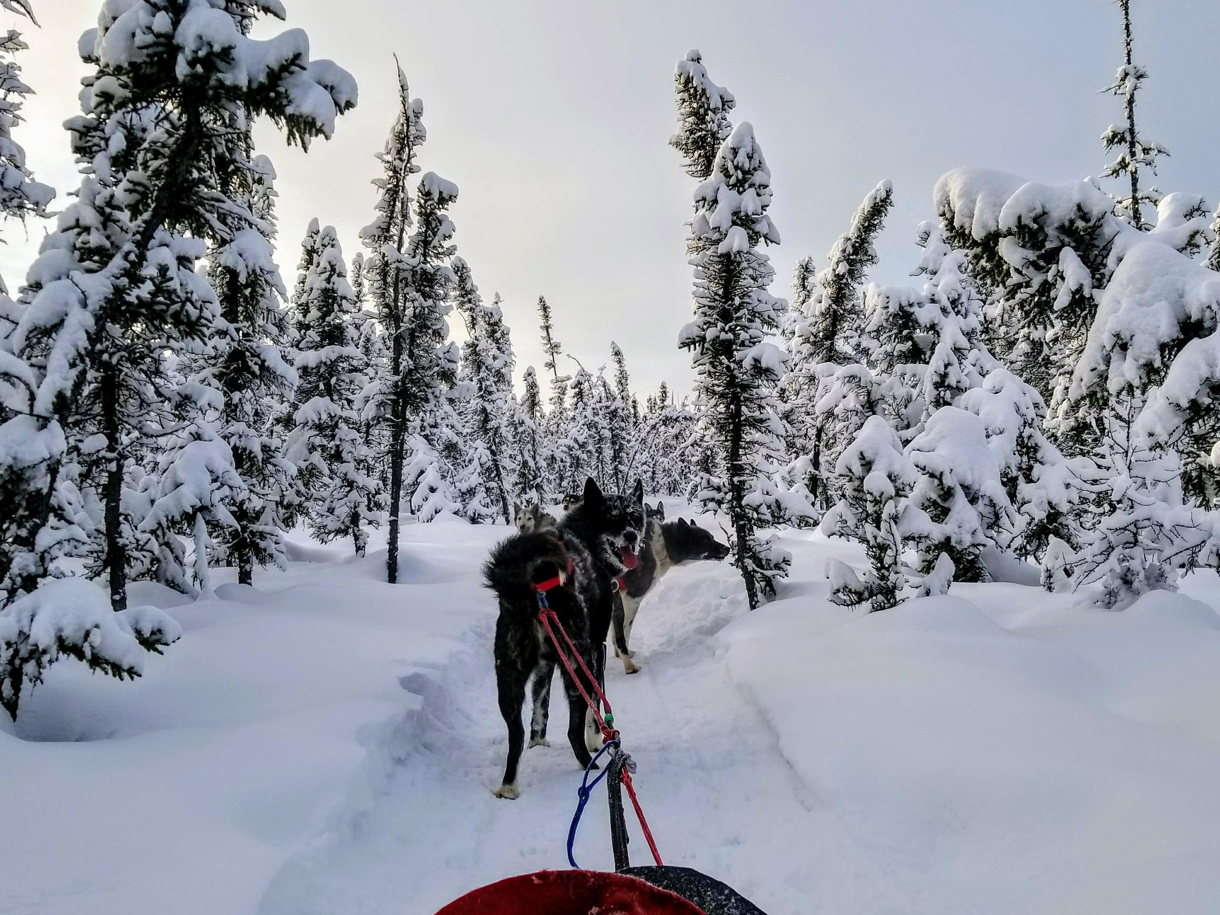 View from the sled. I think I had a smile plastered to my face the entire time.