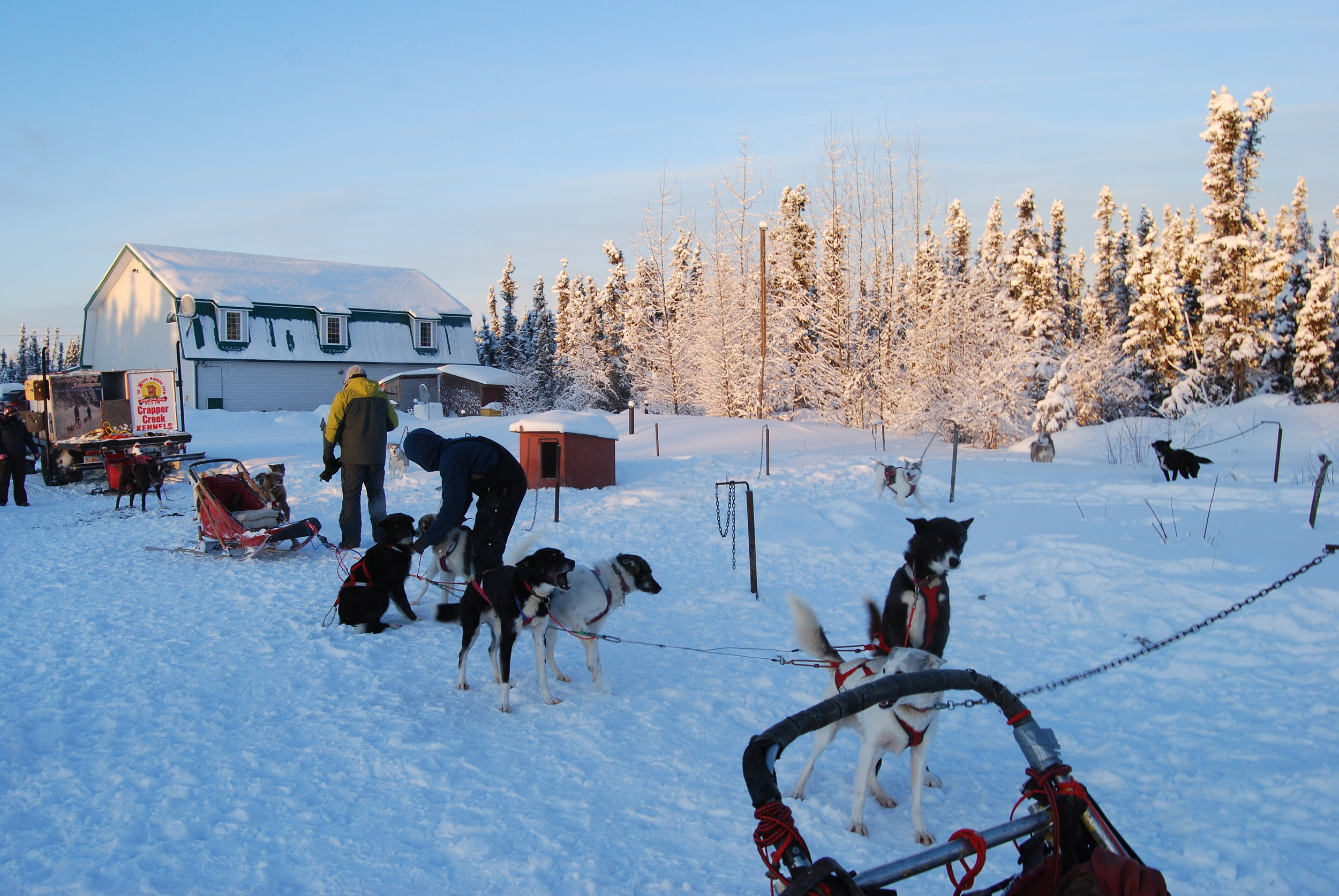 Here we are playing with the dogs as they are getting hooked up to their sleds. The Aurora Nights Inn is in the background.