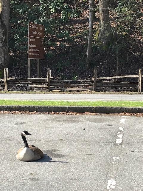 goose-parking-space.jpg