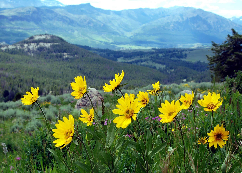 washburnflowers.JPG