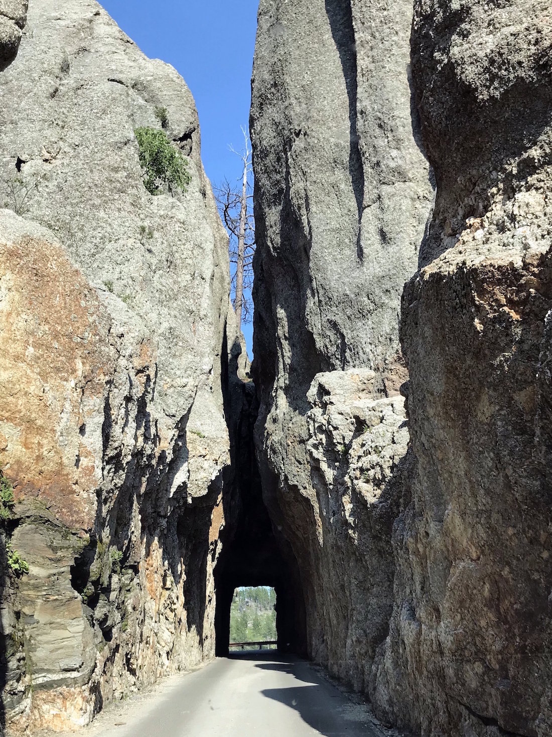 needles-highway.JPG