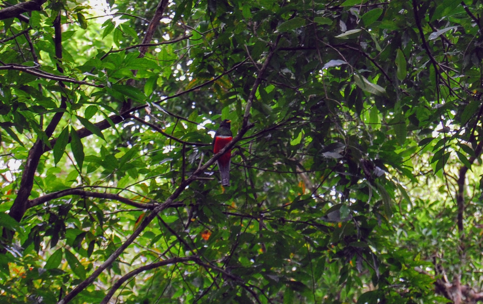 Our guide spotted this trogon, a relative of the quetzal, the national bird of Guatemala and which was revered by the Mayans. We never would have seen this guy on our own. Then he taught the kids to whistle like it. They spent the rest of the trip perfecting their bird calls.