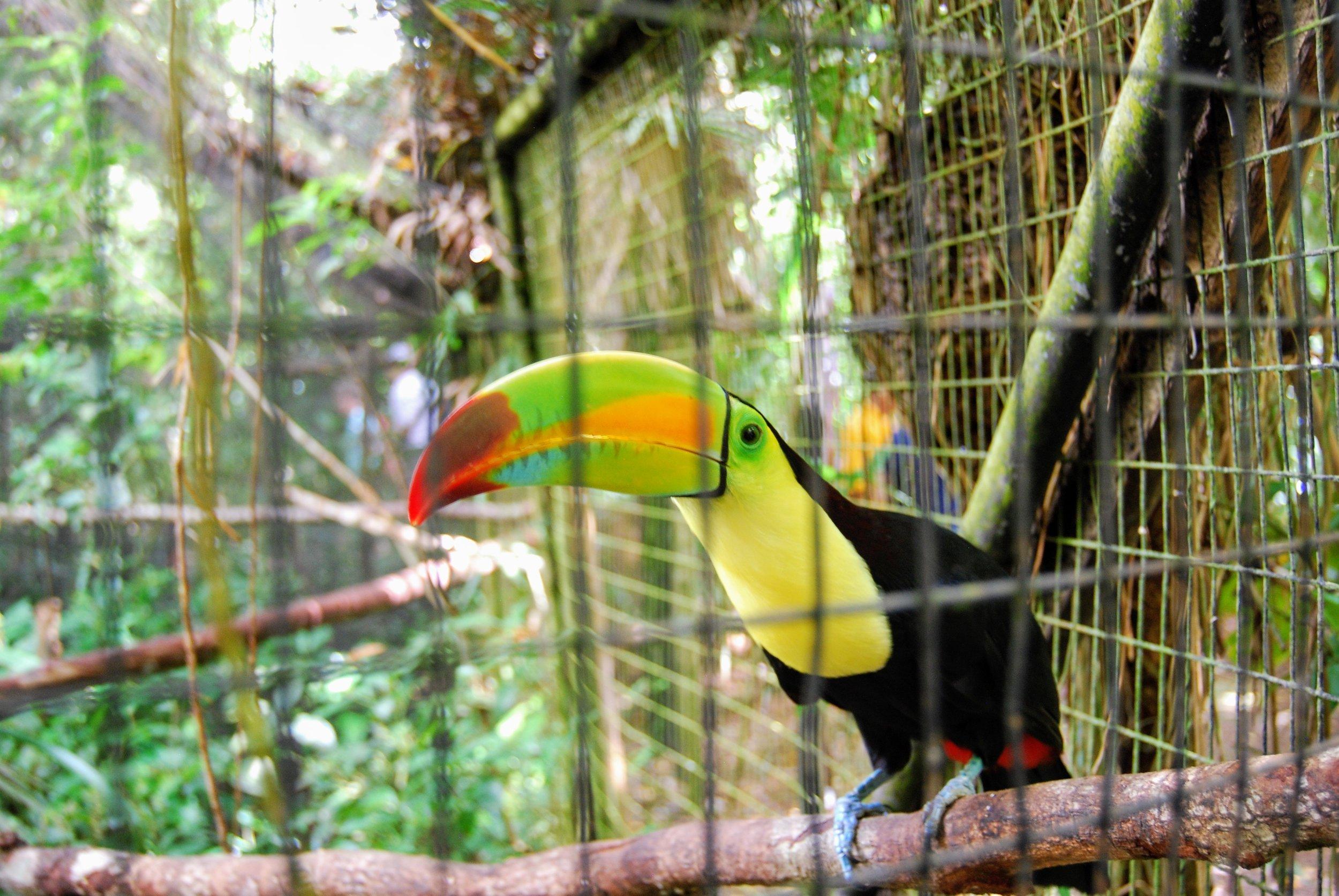 Very Talkative Toucan