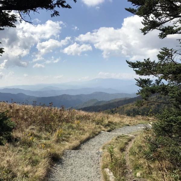 The Appalachian Trail in Roan Mountain State Park near Johnson City
