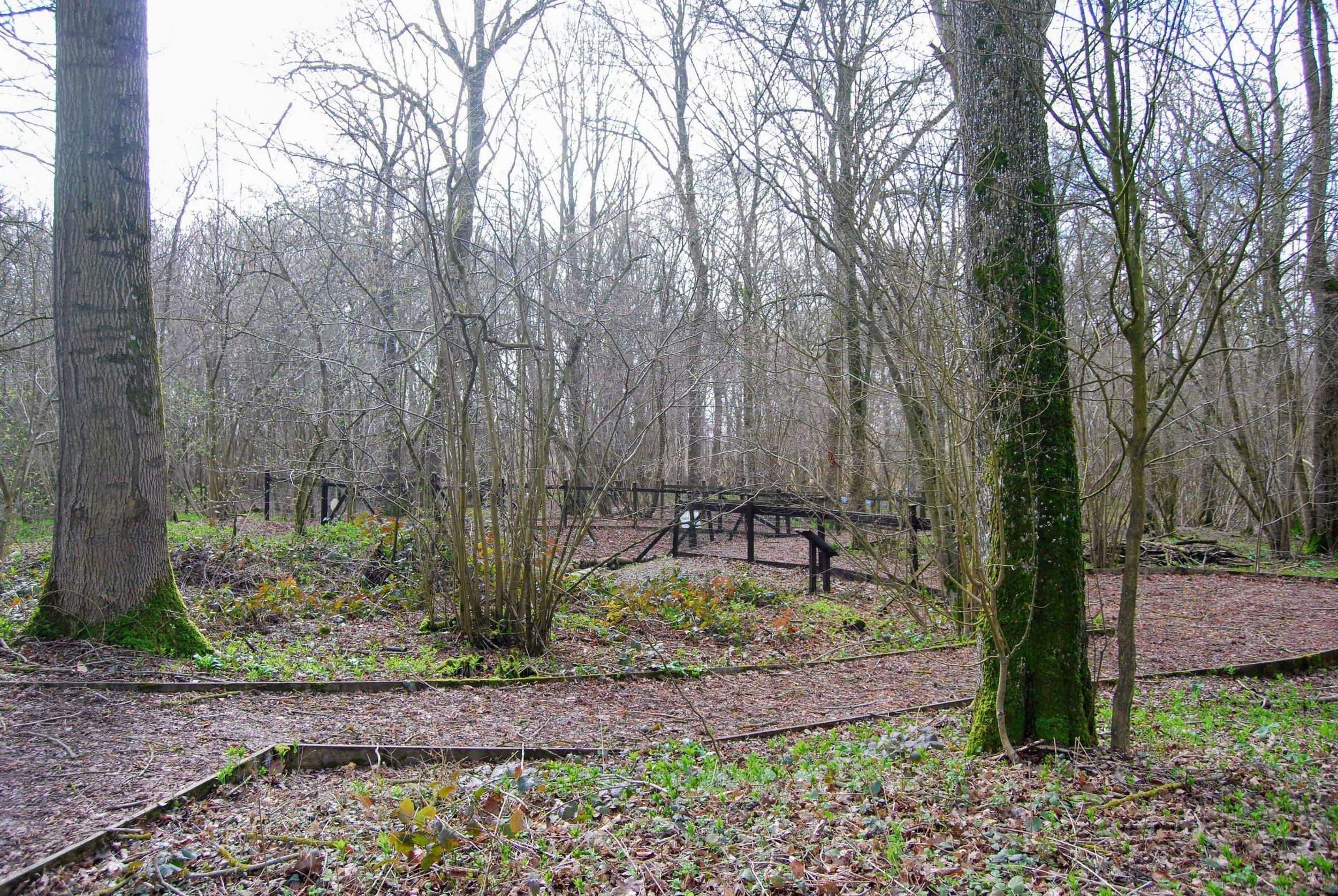 Trail through Thiepval Wood