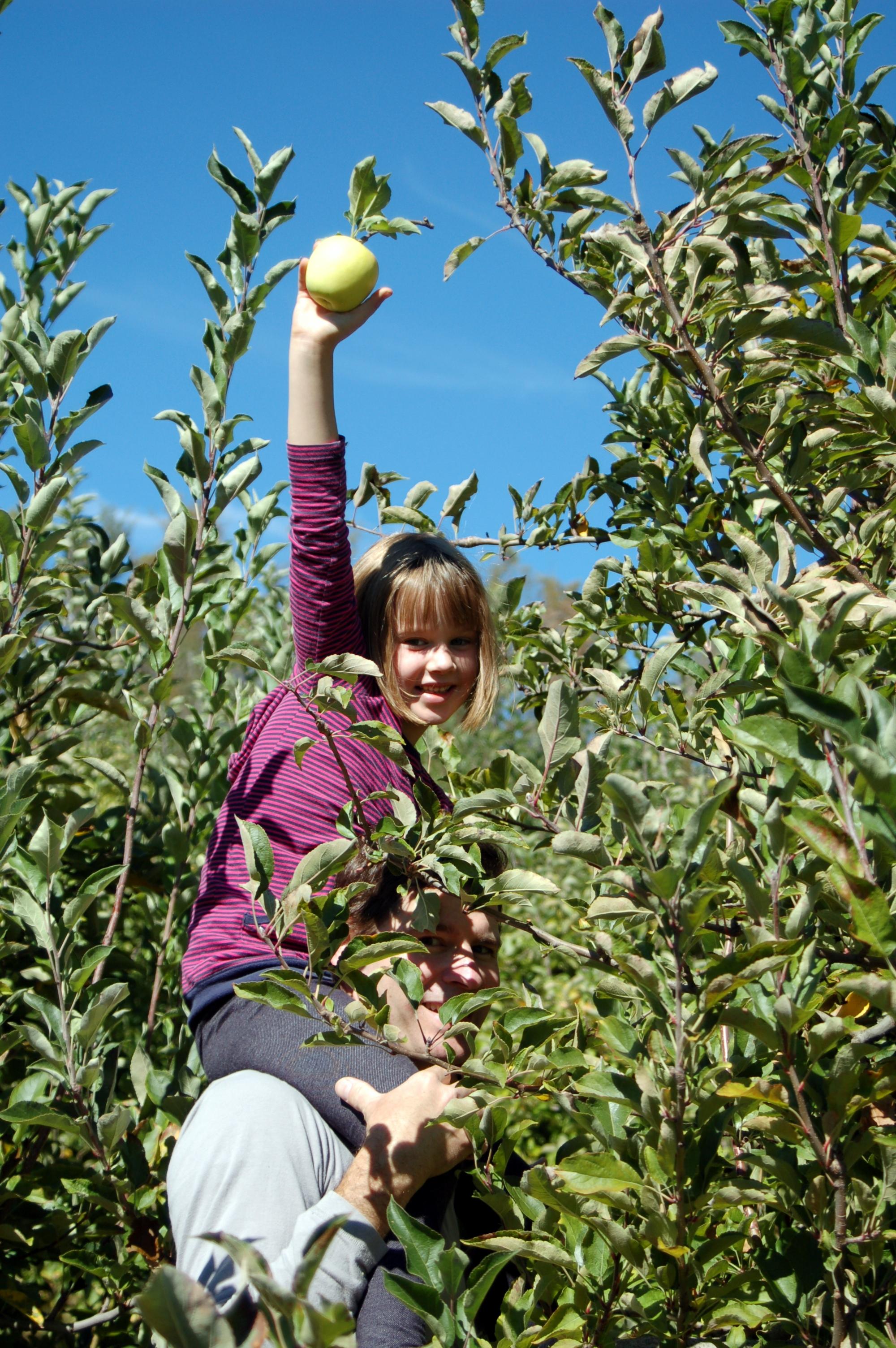 asheville apple picking.JPG
