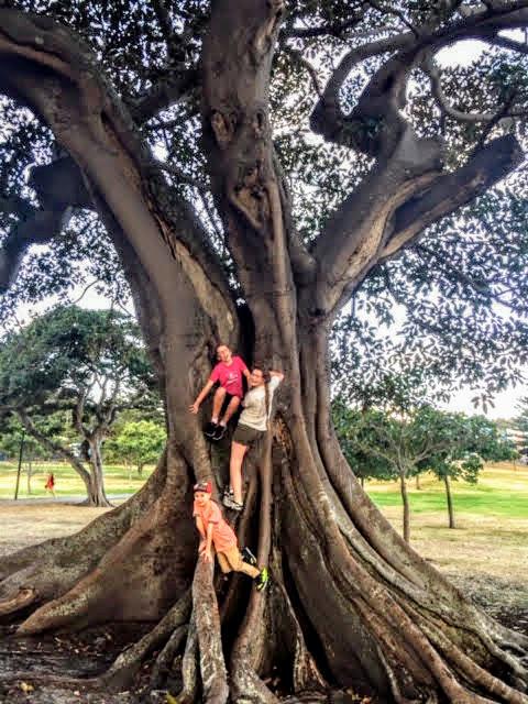 Climbing huge trees in Robertson Park