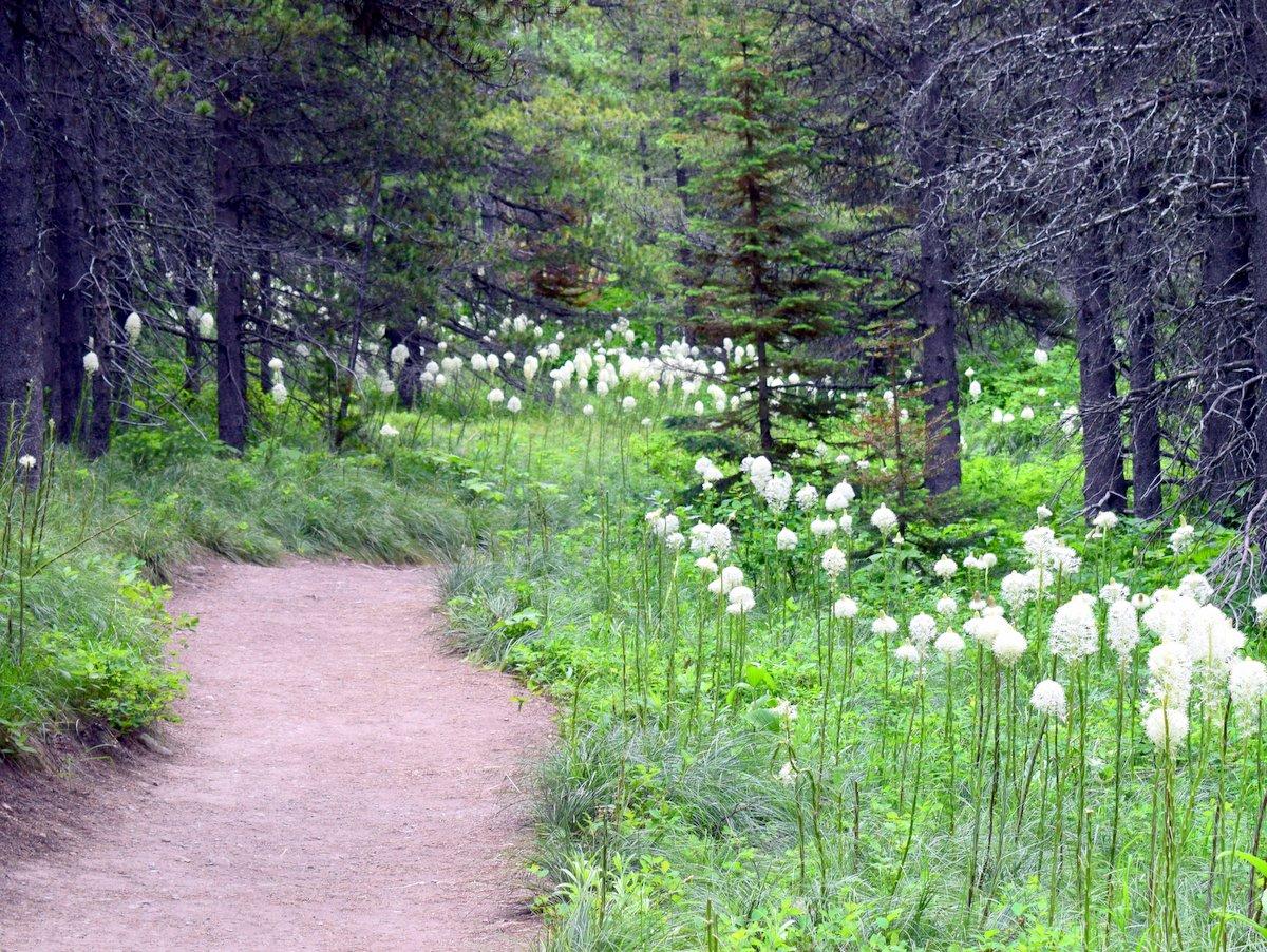 Trail to Fishercap Lake