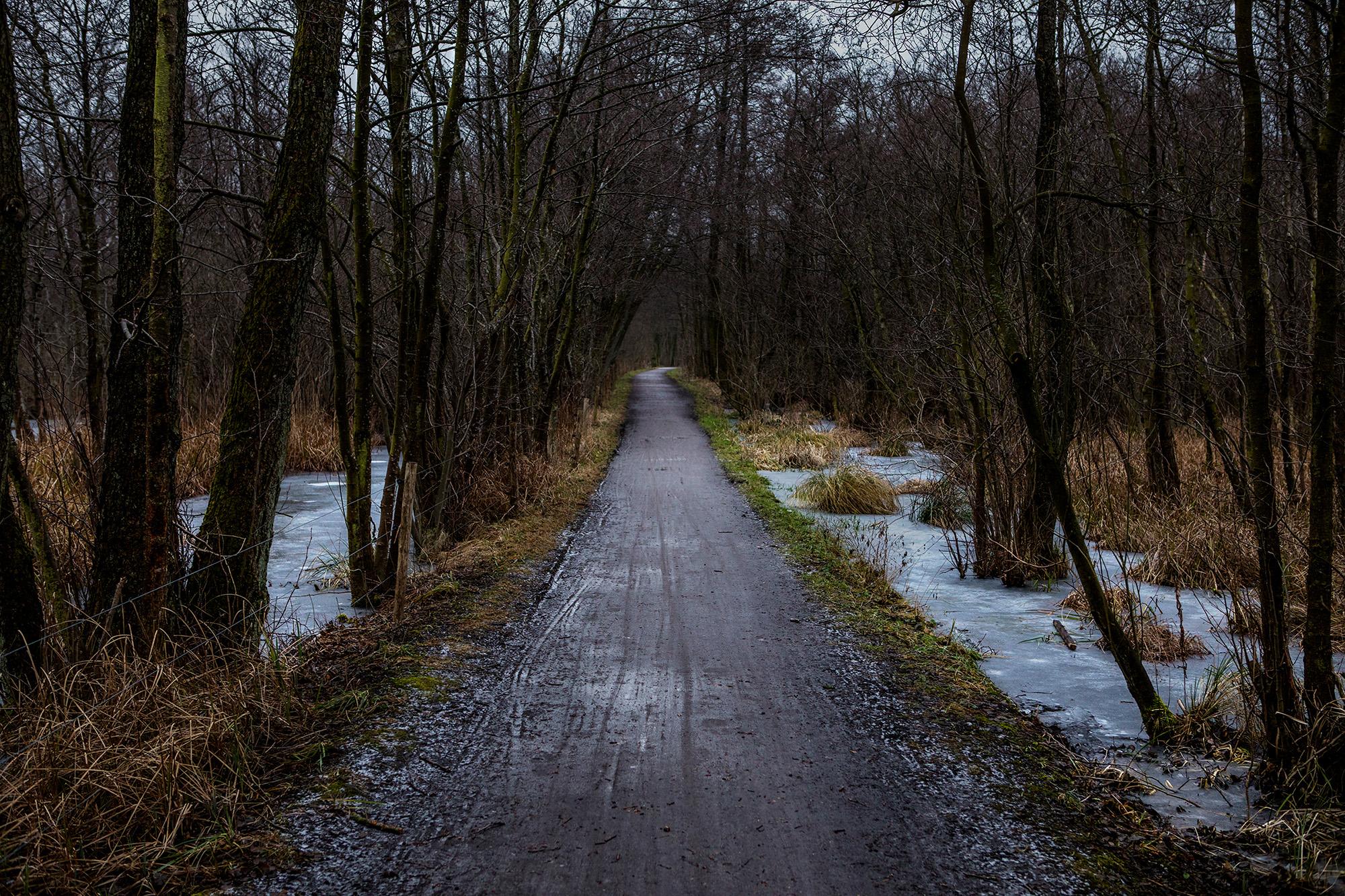 Forest Path.Birkerød, Denmark. 2017
