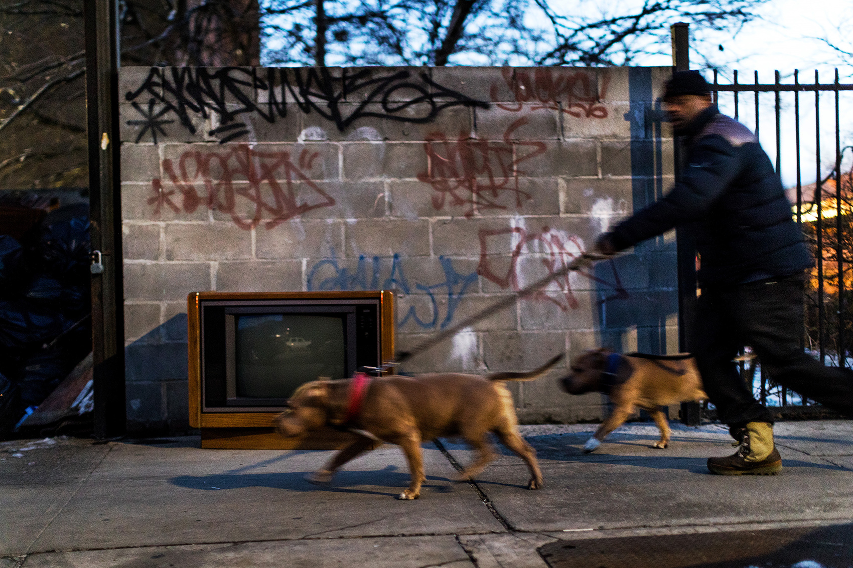 A man walks his dogs past the trash area outside of Ebbets Field Apartment complex in Brooklyn.