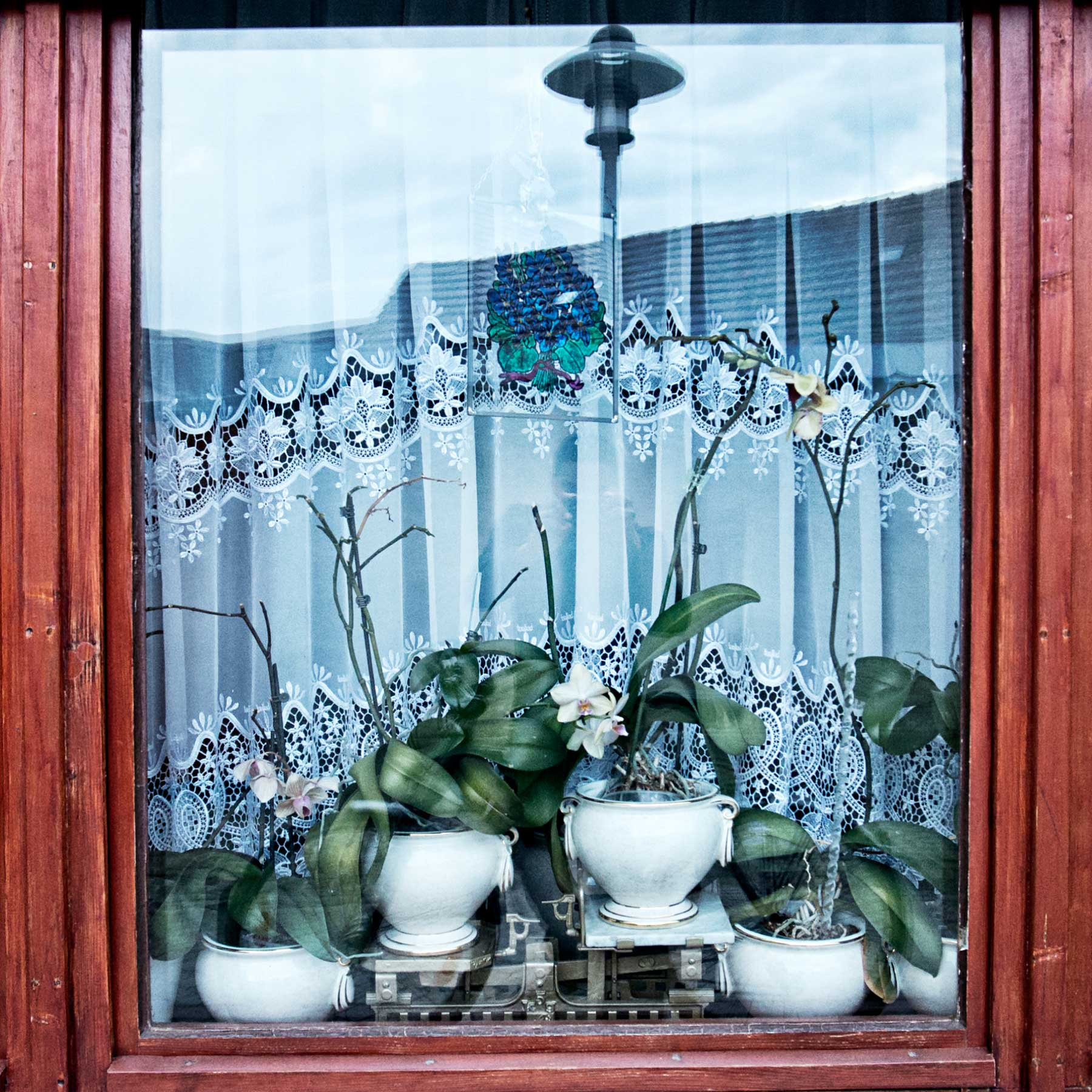 Plants in the window of a home in the old town of Hoyerswerda.