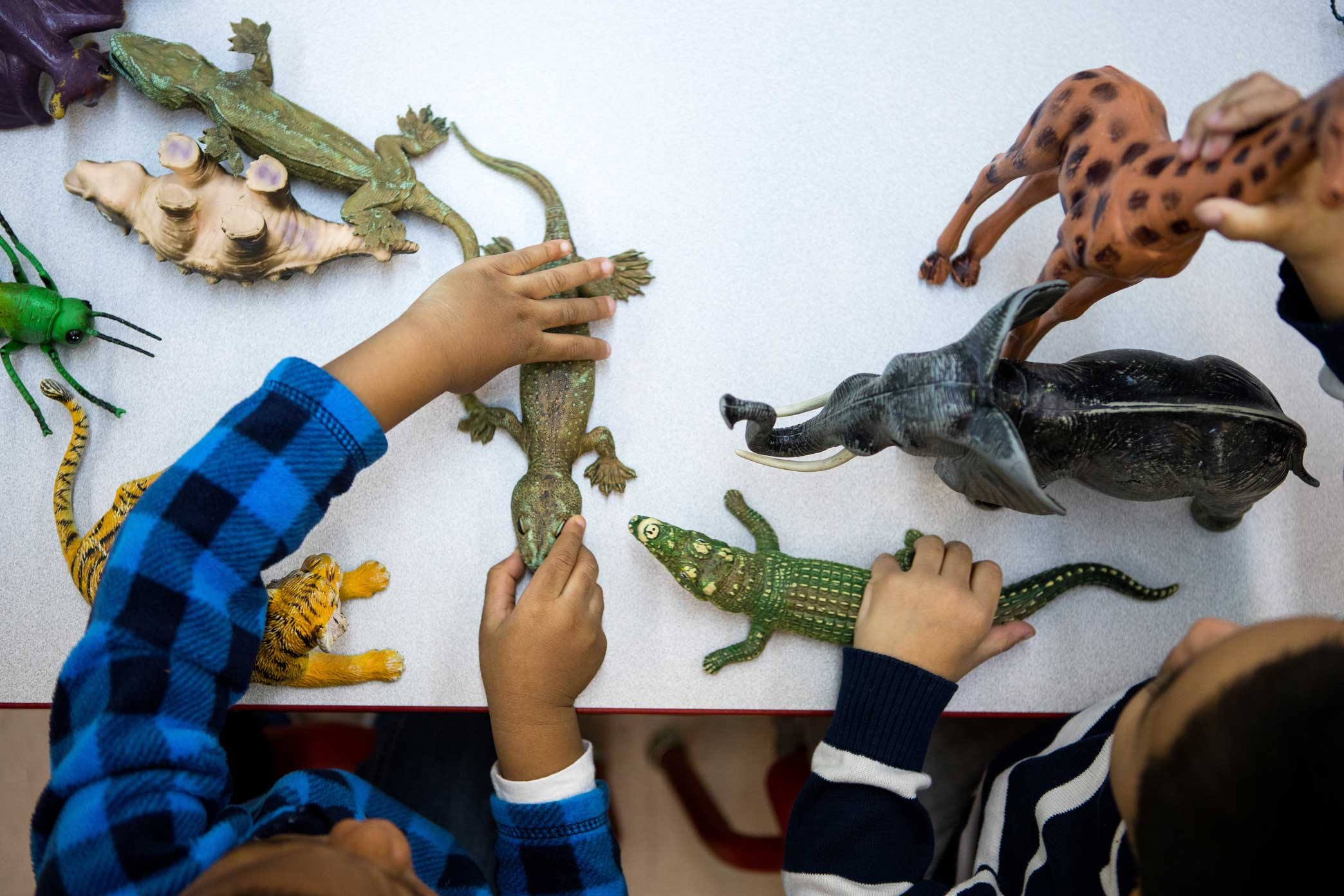 Students learning about animals in an EarlyLearn classroom at Union Settlement in Manhattan, New York.